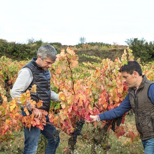 Rioja 'Honorable'
