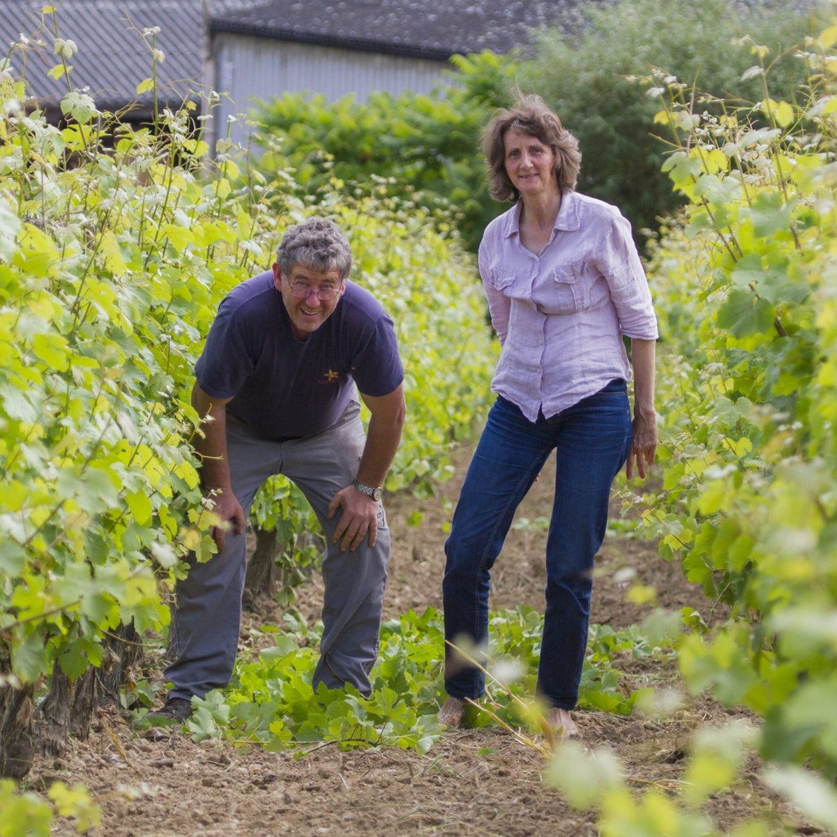 Chinon rouge les Puys Danae
